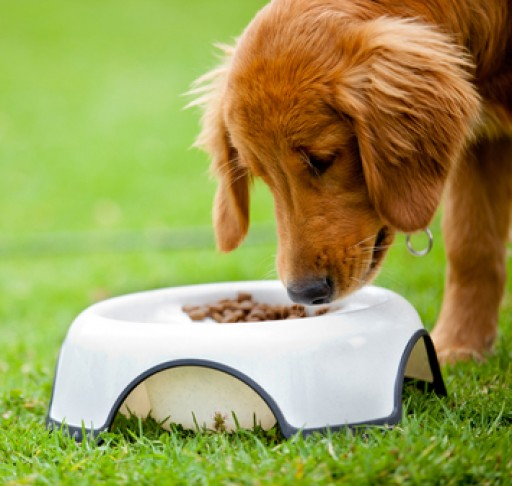 Global Distribution Group to Expand Product Portfolio and Add New Health Oriented Pet Products in 2015