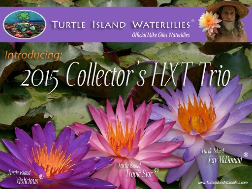 Purple, Pink & Blue Hardy HXT™ Waterlilies Now Available for Colder Climates