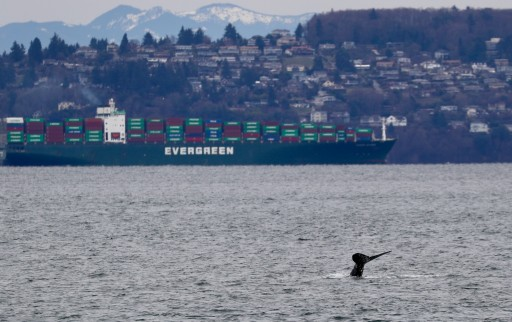 Baby Humpback Finds Home in Tacoma
