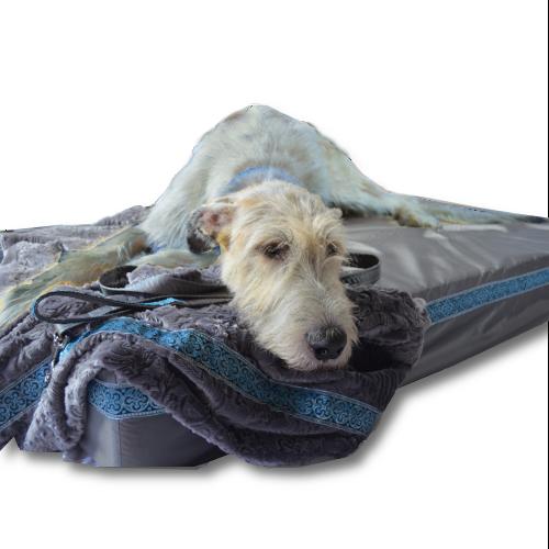 Big Ass Dog Company Introduces A New Luxurious Winter