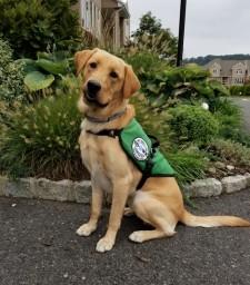 Brawny, a Diabetic Alert Service Dog