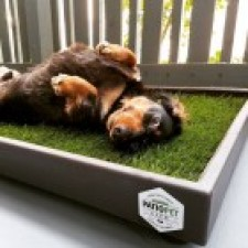 Patio Pet Life Provides An All Natural Potty Solution For Pets That Donu0027t  Have A Backyard