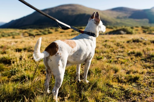 MAGDOG Launches the First Magnetic Dog Collar, Harness and Leash + ID System