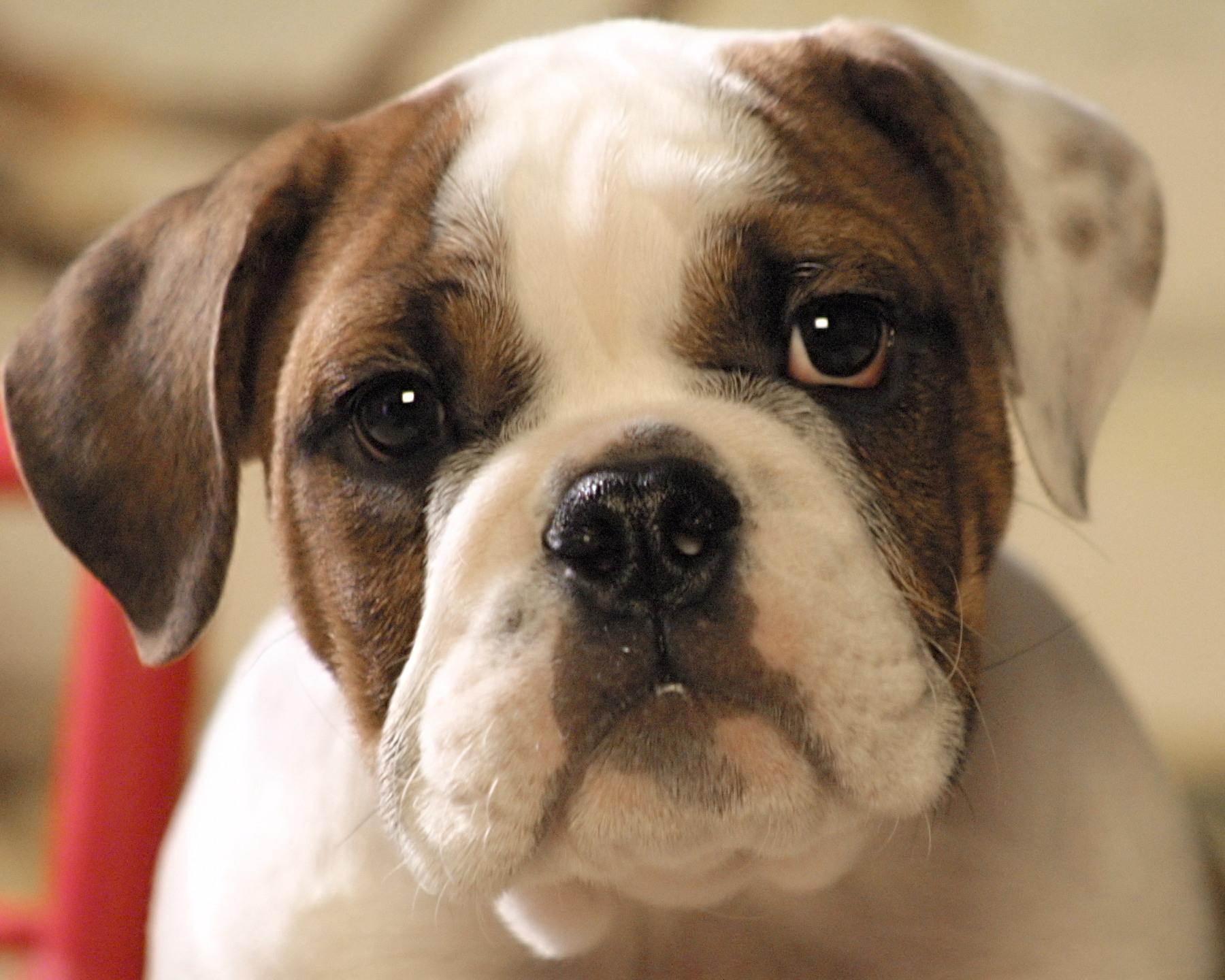Prana Pets Creates CBD Oil Product; Studies Show CBD Oil ...