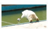 Nika the Bear leaps for her FIFA Confederations Cup Ball