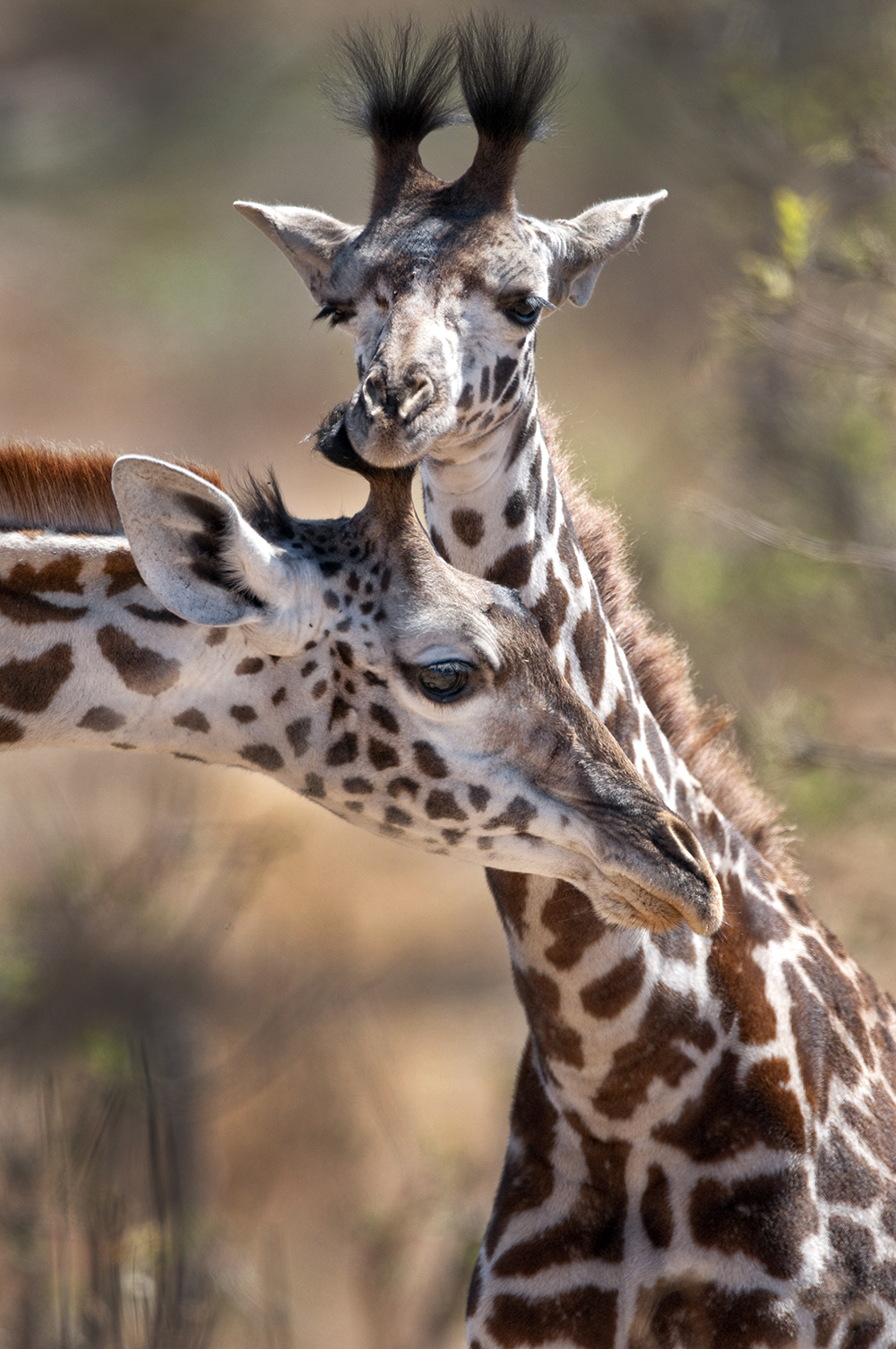 Toys R Us 174 And African Wildlife Foundation Join Forces To