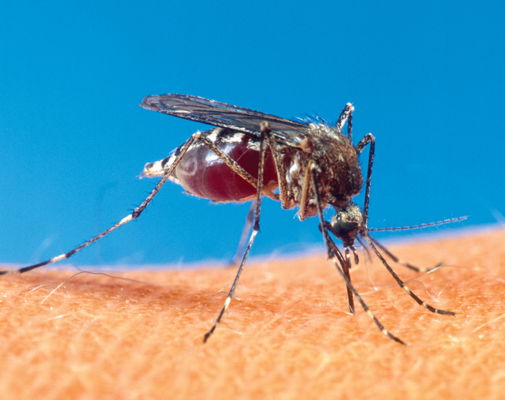 Health department reports confirmed case of West Nile Virus in Lexington