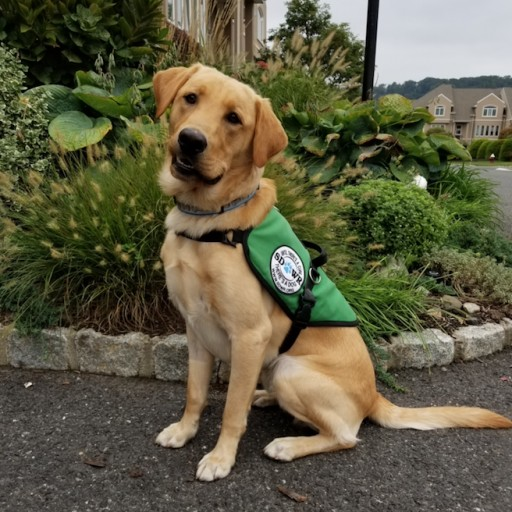 Diabetic Alert Service Dog Will Help Young Man Living With Type 1 DM in Piermont, NY