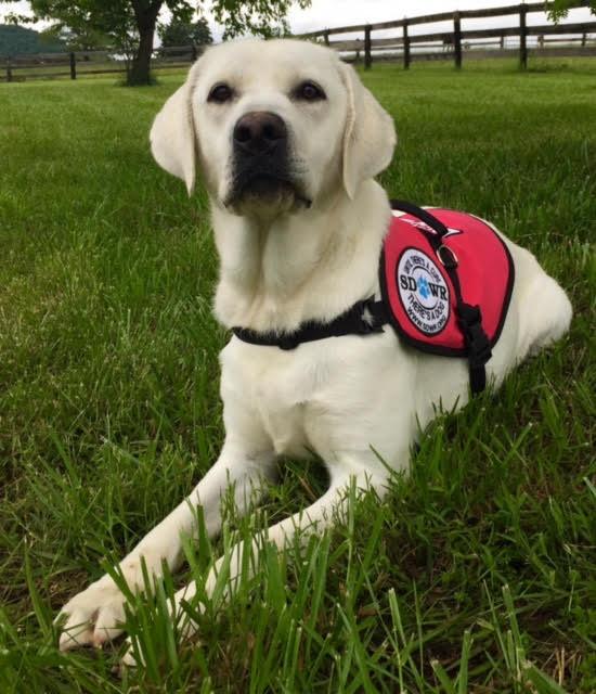 Iowa Training Service Dogs