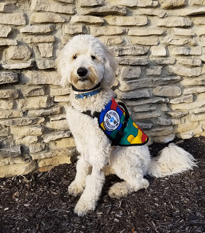 how to get a trained service dog