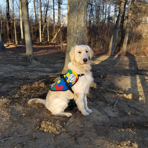 Highly Trained Autism Service Dog to Assist Seven-Year-Old Child in Nokomis, Illinois