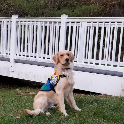 Trained Autism Service Dog to Assist Six-Year-Old Child in Narberth, Pennsylvania
