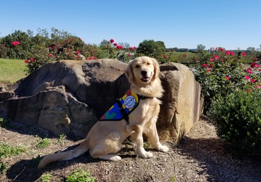 Highly Trained Autism Service Dog to Help Twin Daughters Age Six in Chester, Maryland