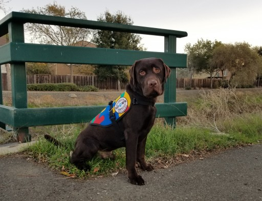 Custom Trained Autism Response Dog Delivered to 4-Year-Old Girl in Hollister, California