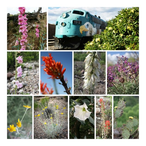 Spring Blooms With Bunnies, Eaglets and Wildflowers Along Verde Canyon Railroad