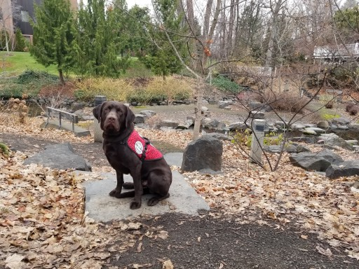 12-Year-Old Girl in North Bend, Oregon Recieves Seizure Response Dog From Service Dogs by Warren Retrievers